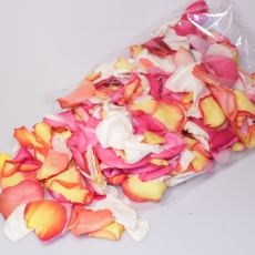 Rosenblüten Blätter (Petalen)
