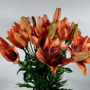 Lilien orange 70 cm