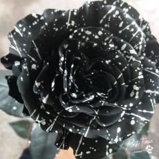 Gefärbt Confetti weiss / schwarz