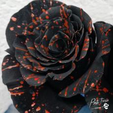 Gefärbt Halloween Confetti orange / schwarz