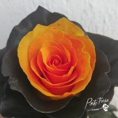 Gefärbt Halloween orange / schwarzer Rand