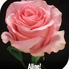 Aline  60 cm 7-ner Bunde