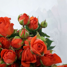 MH Sprayrosen orange-rot Charming Babe