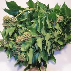 Efeu mit Beeren 500 gr