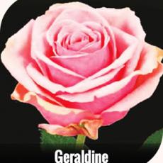 Geraldine 40 cm
