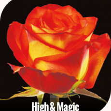 High & Magic 60 cm 7 ner Bund