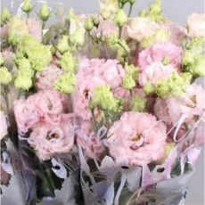 Lisianthus rosa 60 cm
