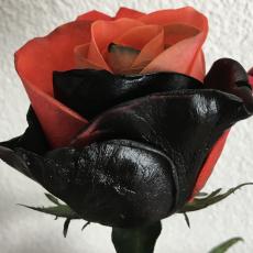 Gefärbt Halloween halb schwarz / halb rot